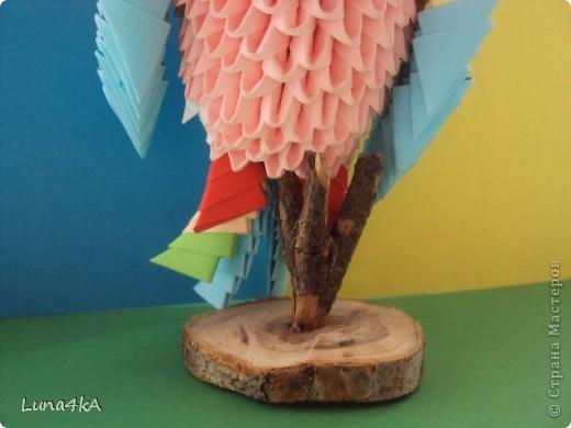 Попугая делала на конкурс птиц. Он занял первое место. фото 4