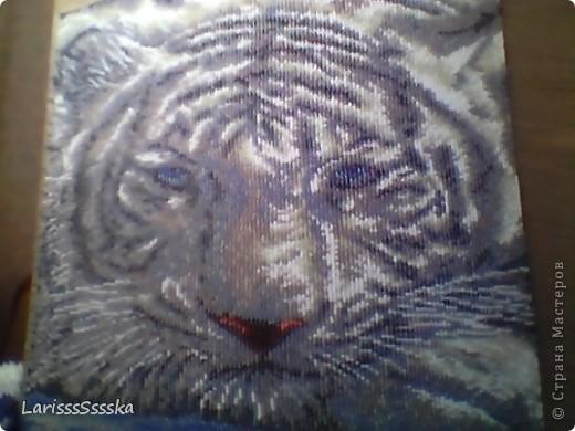 Белый тигр из бисера.  Картина изготовлена в технике ткачество на станке.  Использовала схему для вышивания.