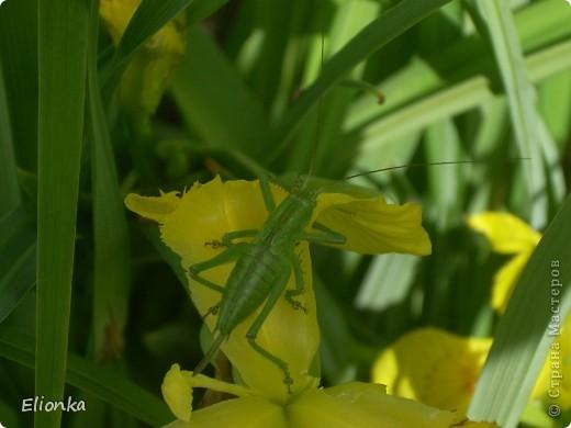 """""""В траве сидел кузнечик..."""" фото 1"""