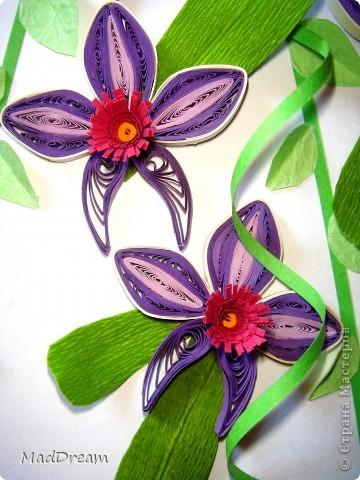 Доброго времени суток, Мастера и Мастерицы!) Захотелось мне как-то раз создать орхидею, а поискав, обнаружила, что мне нравится мне сразу несколько. И решила сделать 5 небольших панно. Получилась своеобразная выставка орхидей ^___^ Наконец-то в промежутке между учебой и сессиями появилось время, чтобы дооформить картинки. З.ы. Идеи навеяны Страной и не только) Итак:  1. В бордовых тонах (http://quillingmesoftlee.blogspot.com/2011/09/quilled-orchids.html) фото 4