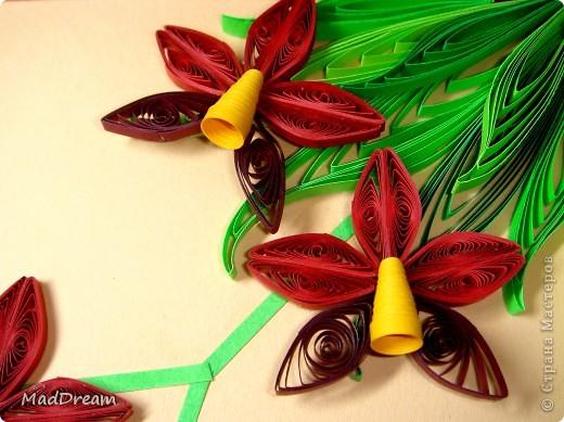 Доброго времени суток, Мастера и Мастерицы!) Захотелось мне как-то раз создать орхидею, а поискав, обнаружила, что мне нравится мне сразу несколько. И решила сделать 5 небольших панно. Получилась своеобразная выставка орхидей ^___^ Наконец-то в промежутке между учебой и сессиями появилось время, чтобы дооформить картинки. З.ы. Идеи навеяны Страной и не только) Итак:  1. В бордовых тонах (http://quillingmesoftlee.blogspot.com/2011/09/quilled-orchids.html) фото 1