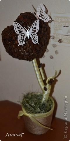 кофейное деревце первая работа фото 1