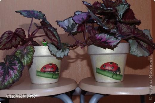 Украсила горшочки (пробы декупажа) фото 1