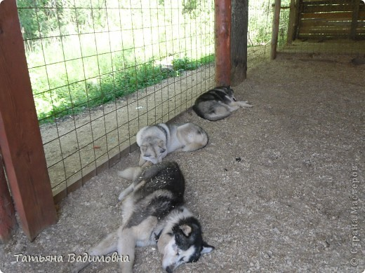Наше стадо, которое началось с путешествия по Этномиру. Правда, сначала оно было виртуальным фото 20