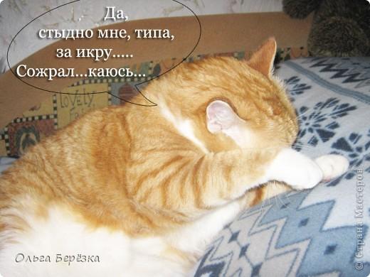 Замечательная жизнь моего кошарика Жорика.... фото 6