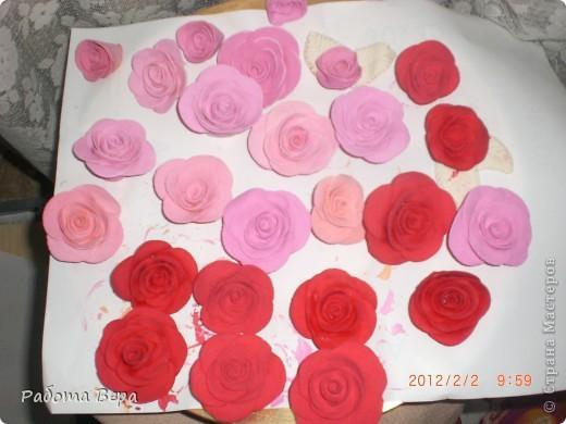 Розы. фото 2