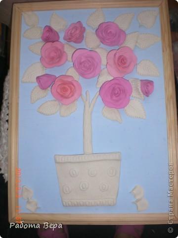 Розы. фото 4