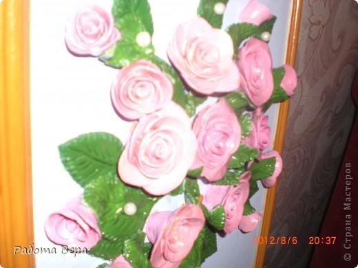 Розы. фото 5