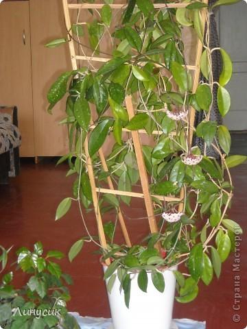 Дорогие друзья, подскажите, как же называется это удивительное растение? фото 4