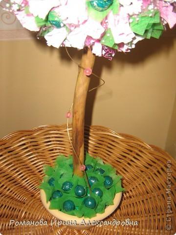 Конфетное дерево фото 5