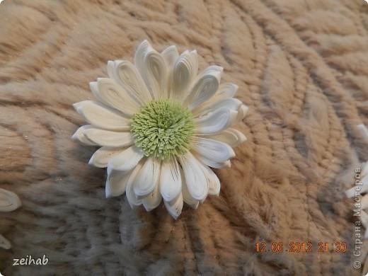 просто  цветы!!!(ХРИЗАНТЭМЫ ) фото 10