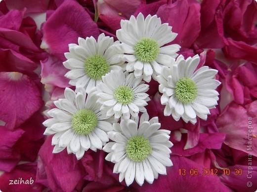 просто  цветы!!!(ХРИЗАНТЭМЫ ) фото 1