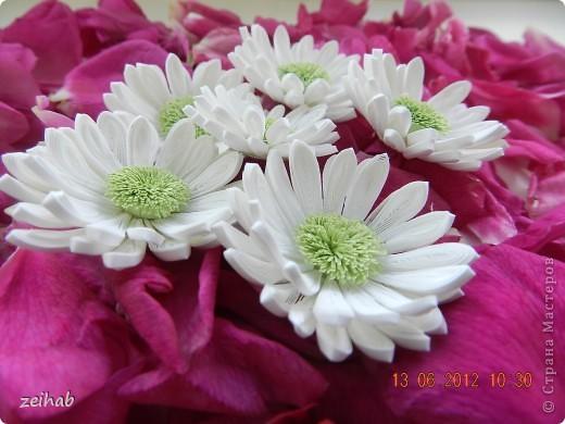 просто  цветы!!!(ХРИЗАНТЭМЫ ) фото 2