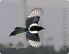 Увидели такую замечательную птицу в парке! фото 3