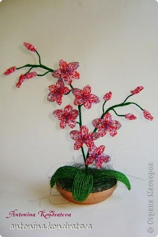 Орхидея для подружки.