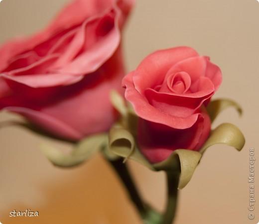 Ахх розы...