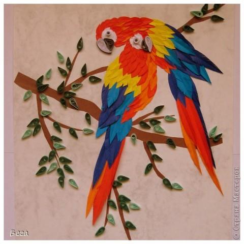 яркие попугаичики фото 4