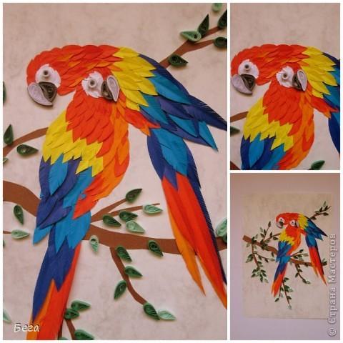 яркие попугаичики фото 3