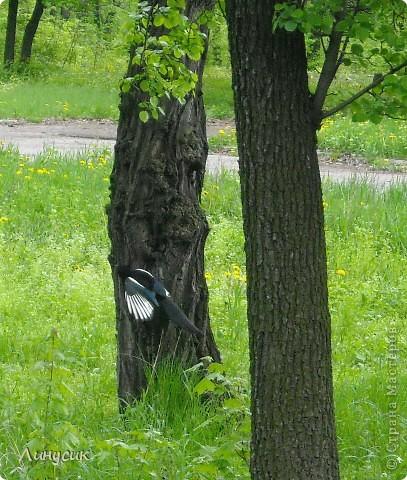 Увидели такую замечательную птицу в парке! фото 1