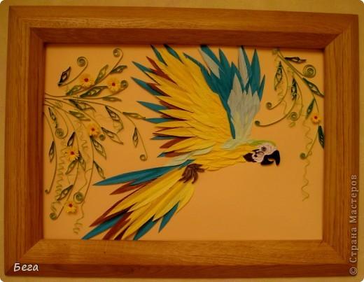 яркие попугаичики фото 5