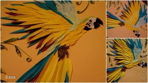 яркие попугаичики фото 2