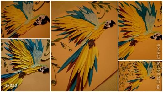 яркие попугаичики фото 1