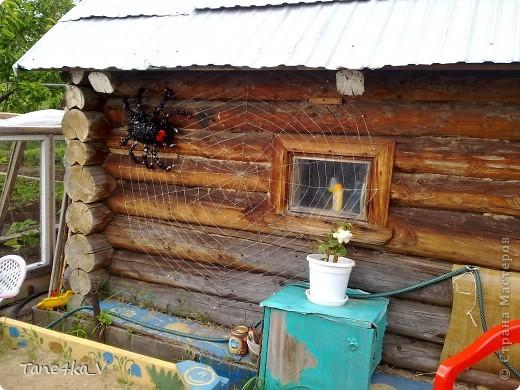 Вот такой хищник теперь живет у нас на баньке)))) фото 4