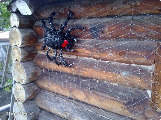 Вот такой хищник теперь живет у нас на баньке)))) фото 3