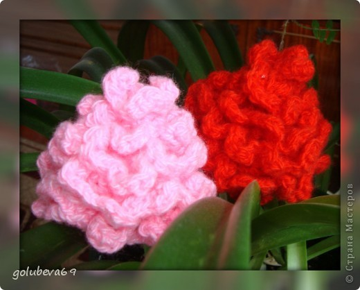 Мои первые цветочки. фото 1
