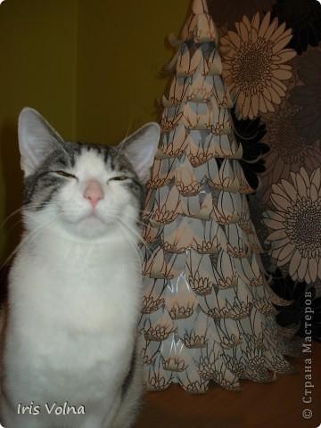 Накануне года кота все родственники получили в подарок по котоподушке. А наш котяр, прищурившись, наблюдал за процессом фотосъемки.  фото 1