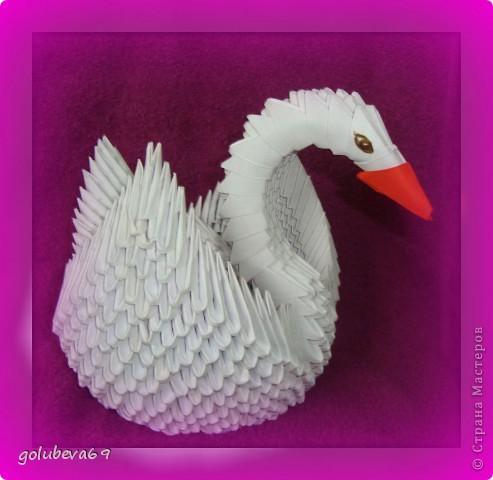 Лебедь. фото 2
