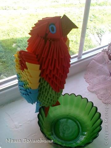 Попугайчик Тимка такой непоседа, но он очень любит вкусняшки.  фото 2