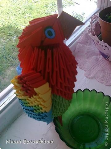 Попугайчик Тимка такой непоседа, но он очень любит вкусняшки.  фото 1