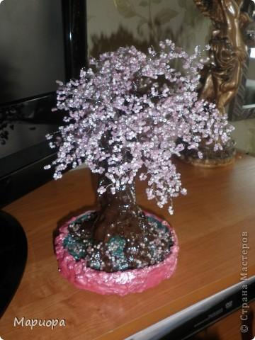 Сакура в цвету... фото 1
