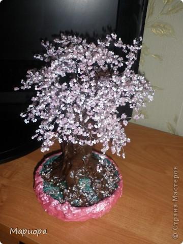 Сакура в цвету... фото 2