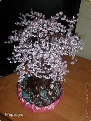 Сакура в цвету... фото 3