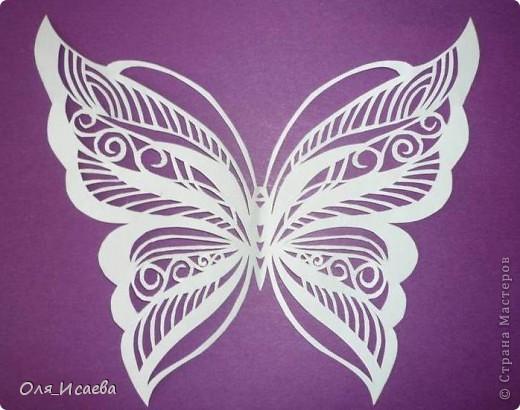И опять бабочки фото 1