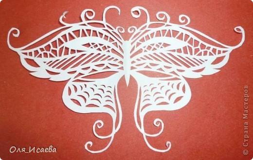 И опять бабочки фото 2