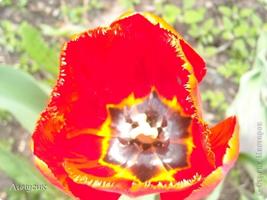 Чудесные розы фото 32