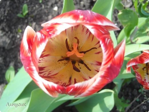 Чудесные розы фото 34