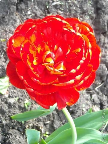 Чудесные розы фото 36