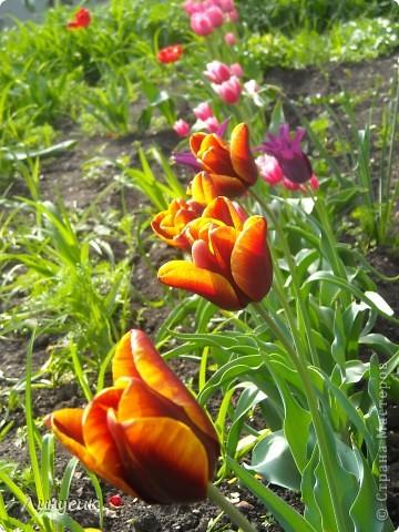 Чудесные розы фото 37