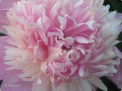 Чудесные розы фото 43