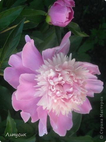 Чудесные розы фото 44