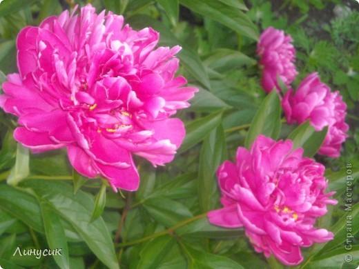 Чудесные розы фото 42
