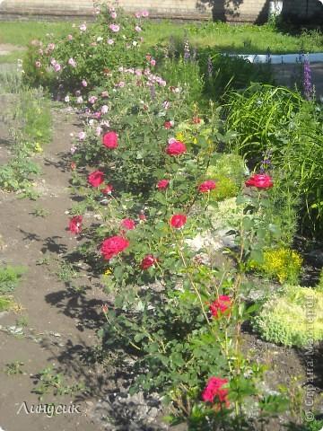 Чудесные розы фото 60
