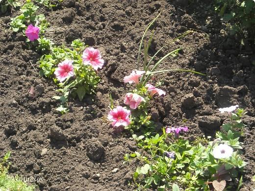 Чудесные розы фото 9