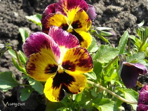Чудесные розы фото 11