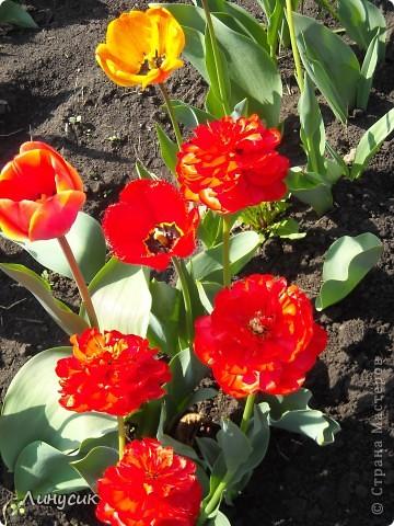 Чудесные розы фото 15