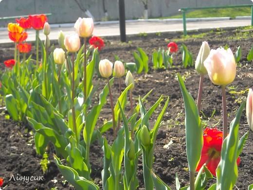 Чудесные розы фото 16